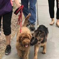 Join Phoenix Children's Walking Team for the World's Largest Pet Walk