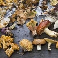 Mushroom Outing