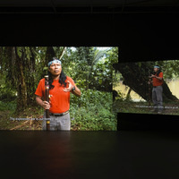 Forest Law by Ursula Biemann and Paulo Tavares