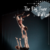 The Fig Tree Waltzes: Acrobatic Conundrum