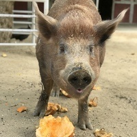 Fall in Love With Fall at The Gentle Barn!