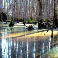 Pocomoke River Camping Trip (Nov 2-4)