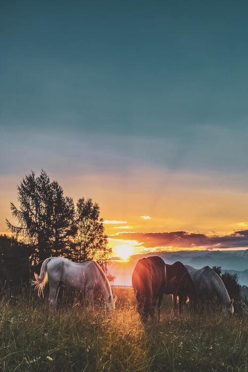 Carolina Foothills Forage Management Workshop:  A guide to better horse pasture management