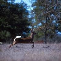 Venison Donation Program & Community Deer Cooler