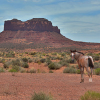 Three Months in the American West