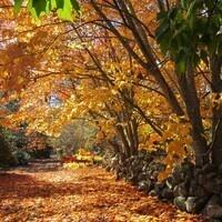 Fall Guided Walk