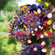 UT Opera Theatre presents Mozart's The Secret Gardener