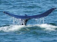 Capt Lou's Whale, Dolphin & Bird Adventure Tours