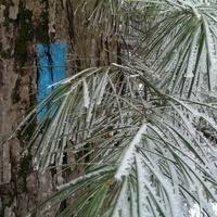 Tree ID + Tea