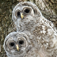 Tiny Tots: Owl Babies (Thurs AM)