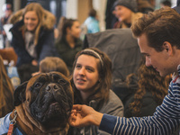 Event image for Therapy Dogs