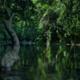 Conservation Through Participation in Communities Bordering the Gunung Leuser National Park, North Sumatra