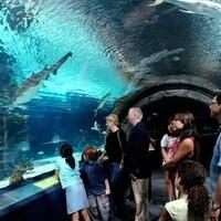 City or Sea- Trip to Philadelphia or the Camden Aquarium YOU CHOOSE