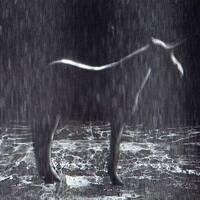 RAW Sensation: Sensations of Ambivalence, Failure, Doubt: A Reading