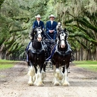 Express Clydesdales benefiting Carousel Ranch