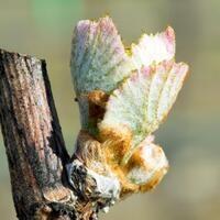 5th Annual Southern Oregon Grape Symposium