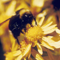 PNW Pollinator Summit and Conference