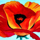 California Poppy ~ Paint & Sip ~ California Wild Fire Relief Fundraiser