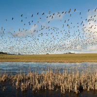 Extreme Migrations! Tales from the Flyways