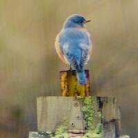 Winter Birding for Beginners