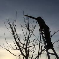 Basic Winter Fruit Tree Care: Pruning and More!