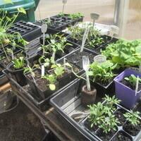 Seed Starting Workshop