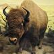 Texas Wildlife Day