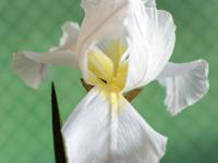 Garden Creativity: Paper Blooms