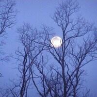 Presidents' Week- Full Moon Hike