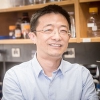 Cancer Research Seminar: Xinyang Zhao, Ph.D.