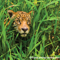 """Land of the Jaguars: Wild Wetlands of South America""—A New Presentation by Frans Lanting and Chris Eckstrom"