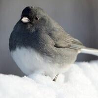 Birds and Beverages: Project FeederWatch