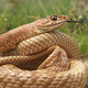 New exhibit: Snakes of Colorado