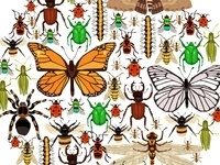 Nature Learning Center Open House: Insect Discovery