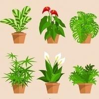 Little Scientist - Plants