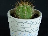 DIY Cactus!