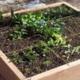 Basics of Colorado Gardening