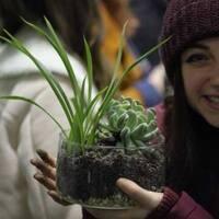 Tu B'Shevat Succulent Planting