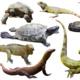 Reptile Encounter at Seneca