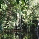 Evolution, Ecology and Conservation of Fish-Forest Interactions