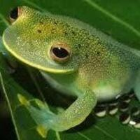 Fish got to swim, birds got to fly, I'm gonna study frogs 'til I die