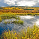 World Wetlands Day Hike