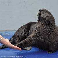 Science Sunday—Sea Otter Palm Reading: Measuring Sense of Touch
