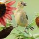 Backyard Habitat Gardener - Spring Bird Camp