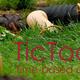 TicToc: Hula Hooping