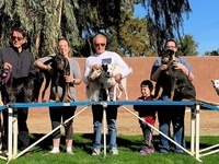 Fun-Run Dog Agility Classes