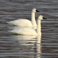 Birding at Middle Creek Wildlife Management Area