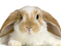 Pee Dee Region 4-H Rabbit Project Registration