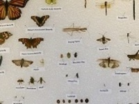 How to Make an Insect Collection with Entomologist Mike Ferro