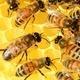 Bees, Herbs & Natural Sprays